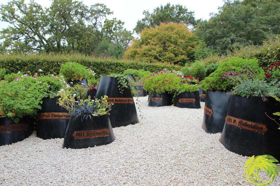 5 - Le Jardin des 101 Pelargoniums (© Aurel Brouard)